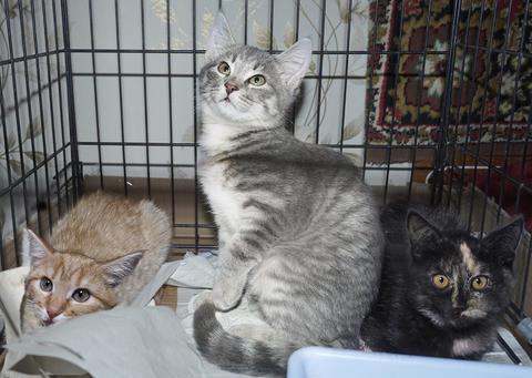 Без породы, Разноцветные котята в дар от волонтёрской группы